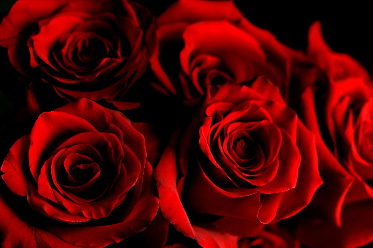 roses-m
